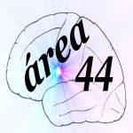www.area44.es